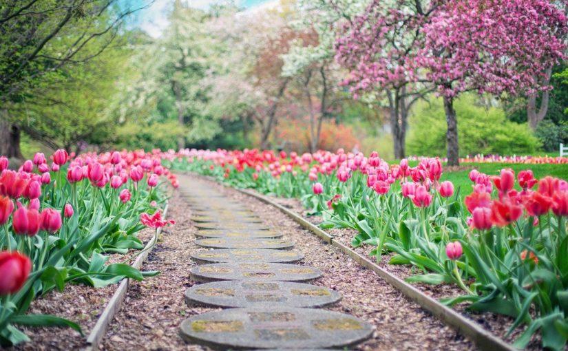 Piękny ,a także czysty ogród to zasługa wielu godzin spędzonych  w jego zaciszu w trakcie pielegnacji.